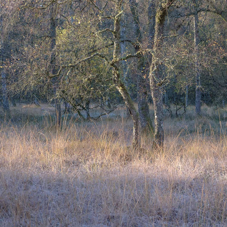Christopher Swan-Perthshire-Autumn-9.jpg