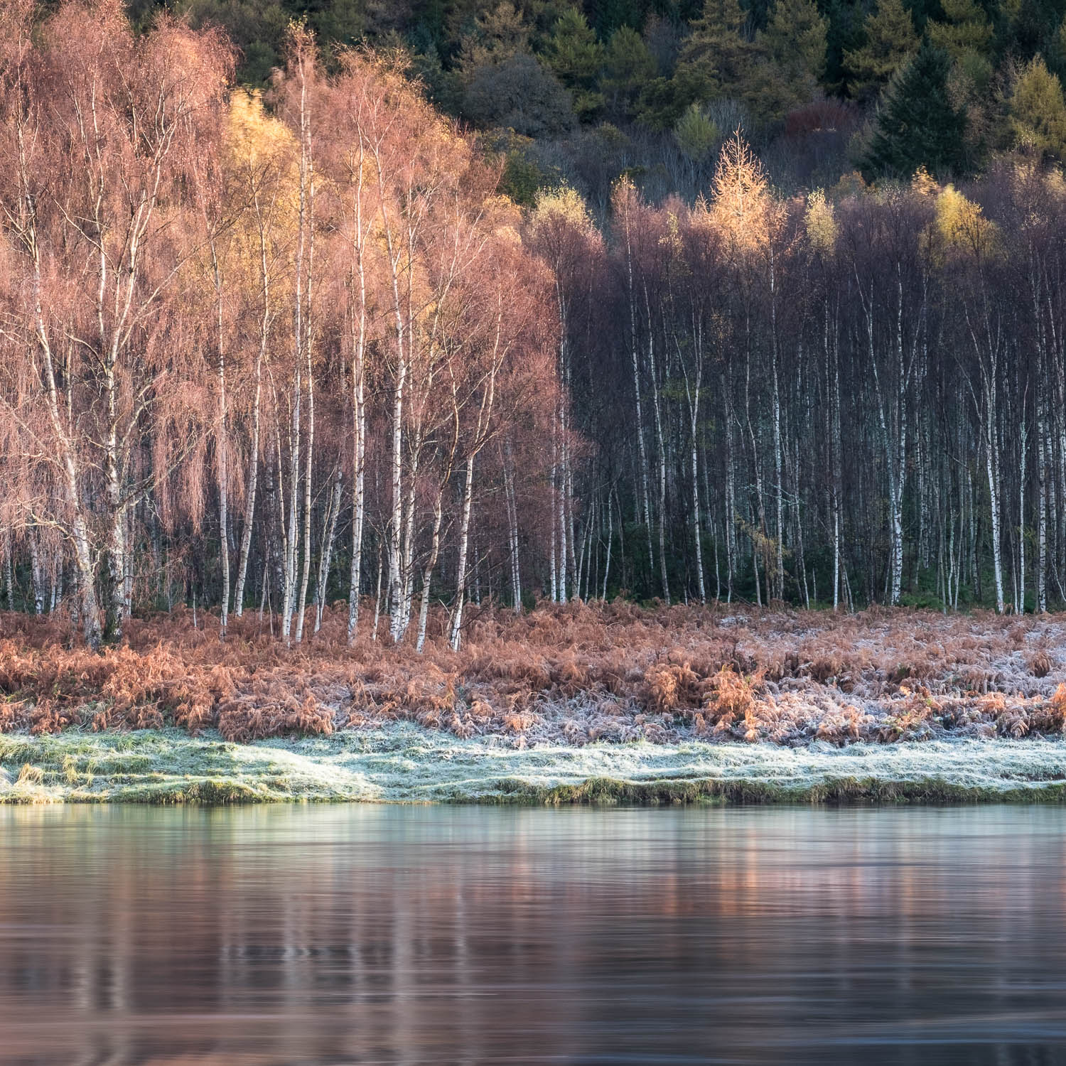 Christopher Swan-Perthshire-Autumn-10.jpg