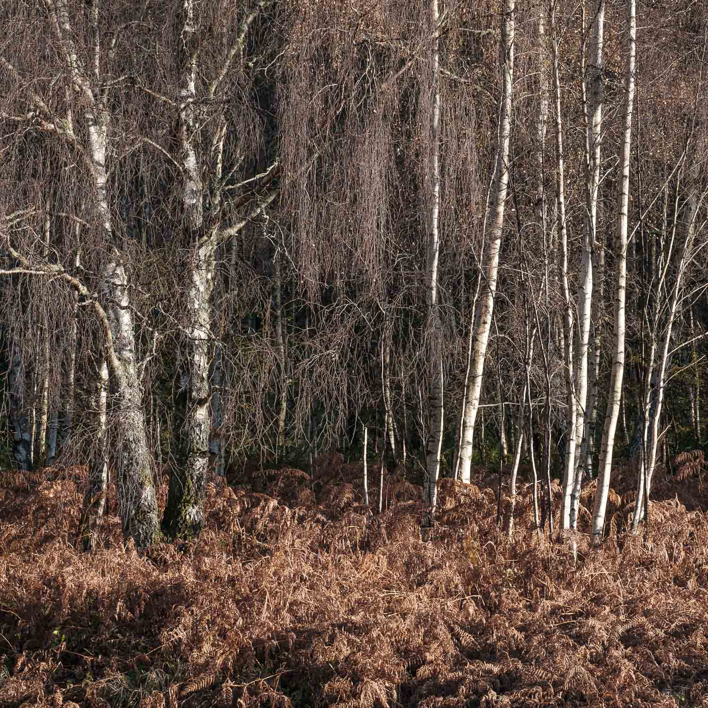 Christopher Swan-Perthshire-Autumn-12.jpg