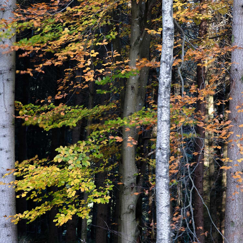 Christopher Swan-Perthshire-Autumn-13.jpg