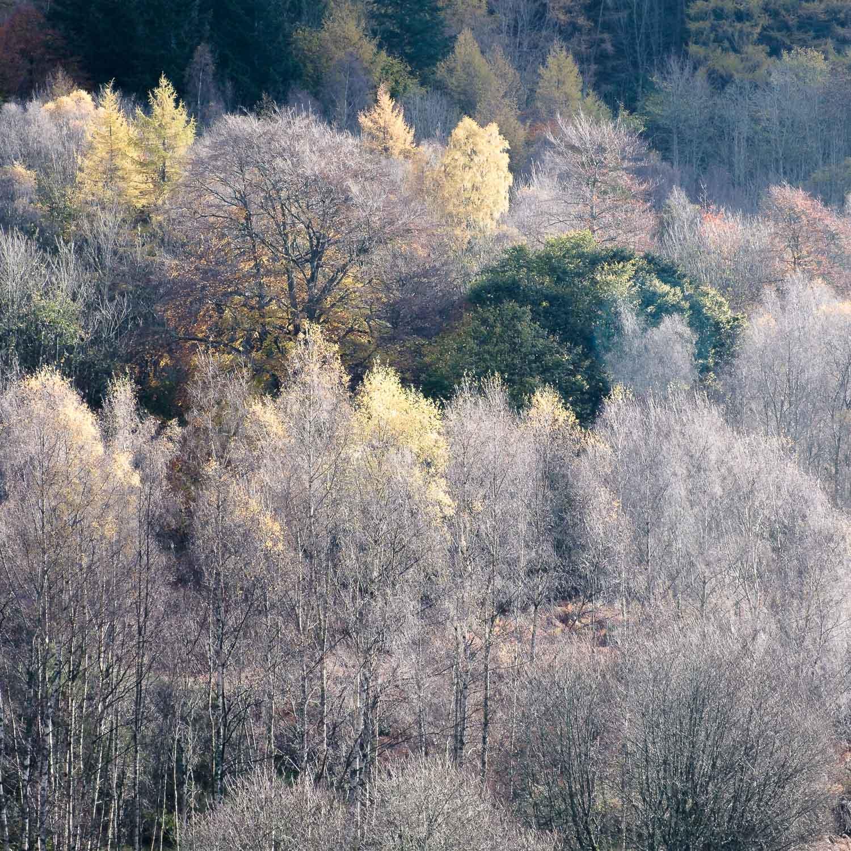 Christopher Swan-Perthshire-Autumn-14.jpg