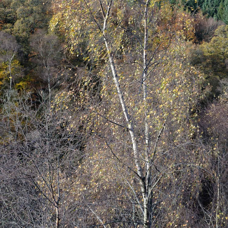 Christopher Swan-Perthshire-Autumn-16.jpg