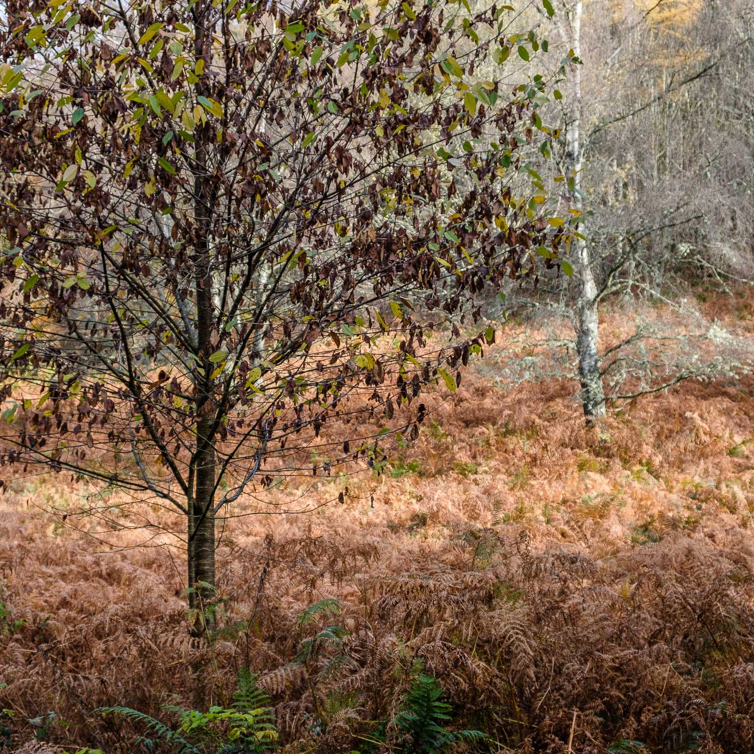 Christopher Swan-Perthshire-Autumn-17.jpg