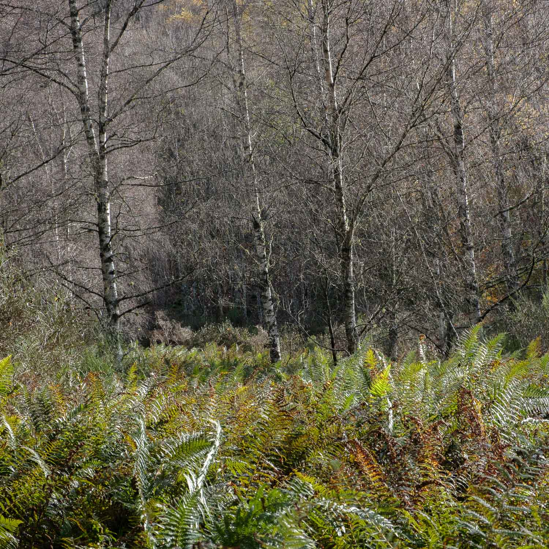 Christopher Swan-Perthshire-Autumn-18.jpg