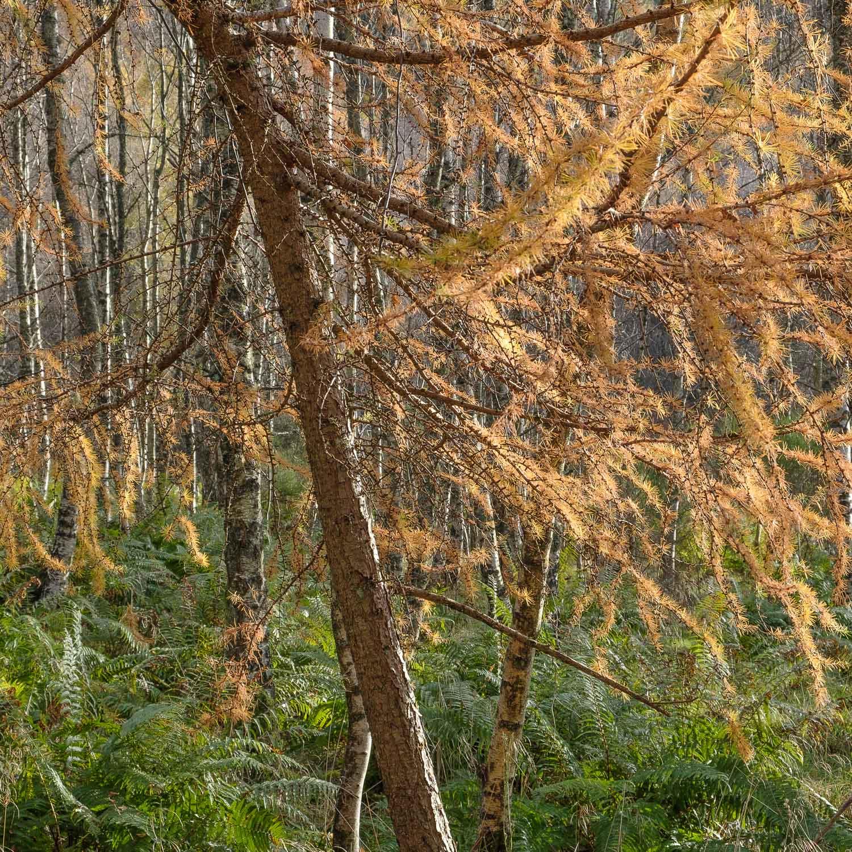 Christopher Swan-Perthshire-Autumn-19.jpg