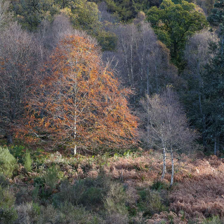 Christopher Swan-Perthshire-Autumn-20.jpg