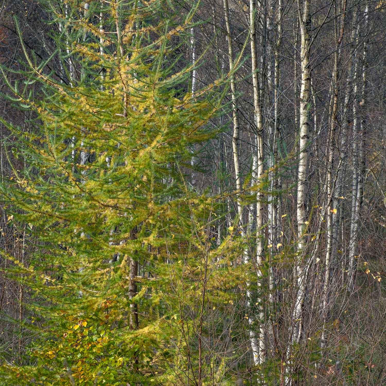 Christopher Swan-Perthshire-Autumn-21.jpg