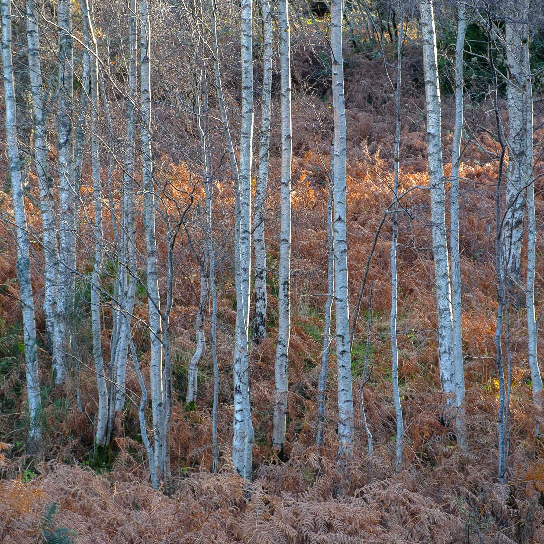 Christopher Swan-Perthshire-Autumn-22.jpg