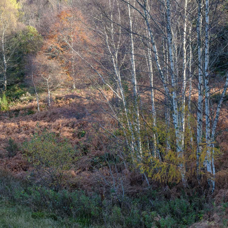 Christopher Swan-Perthshire-Autumn-23.jpg