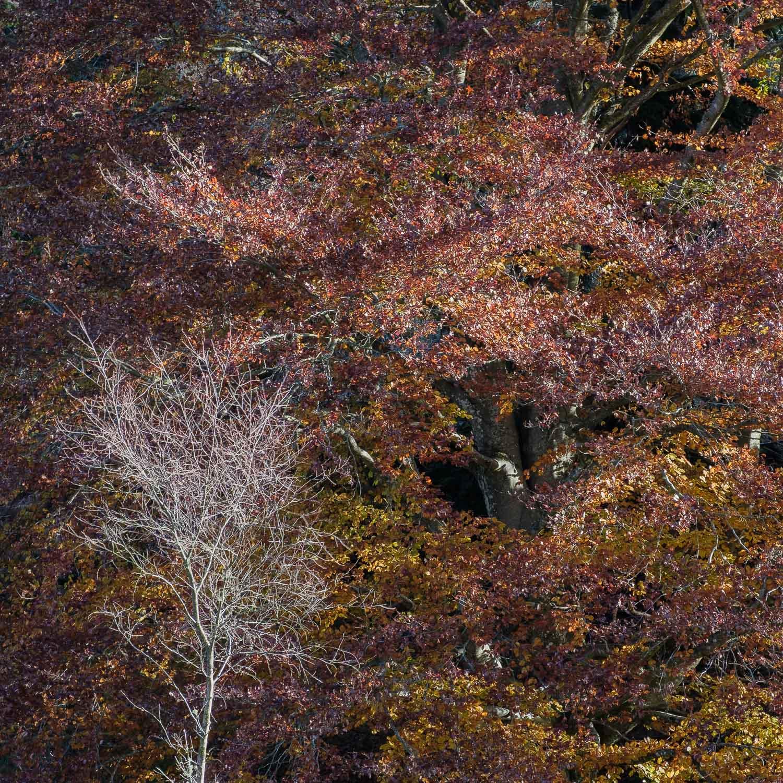 Christopher Swan-Perthshire-Autumn-24.jpg