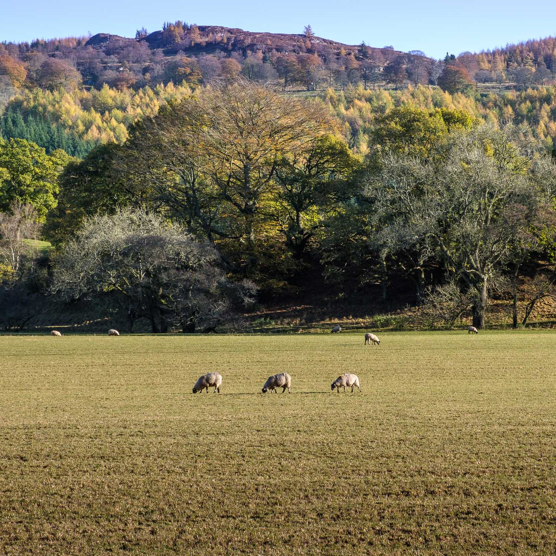 Christopher Swan-Perthshire-Autumn-25.jpg