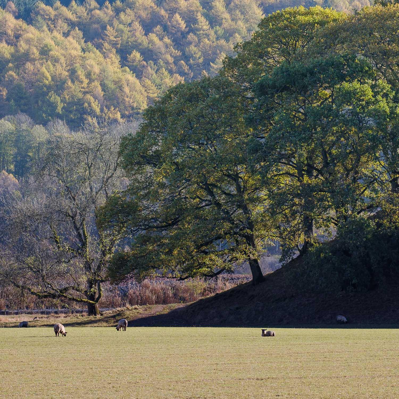 Christopher Swan-Perthshire-Autumn-26.jpg