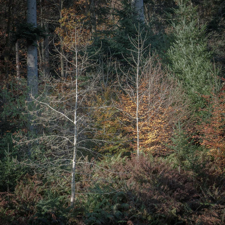 Christopher Swan-Perthshire-Autumn-27.jpg