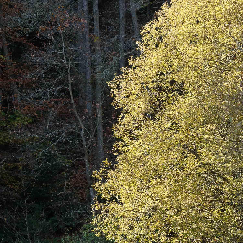 Christopher Swan-Perthshire-Autumn-28.jpg