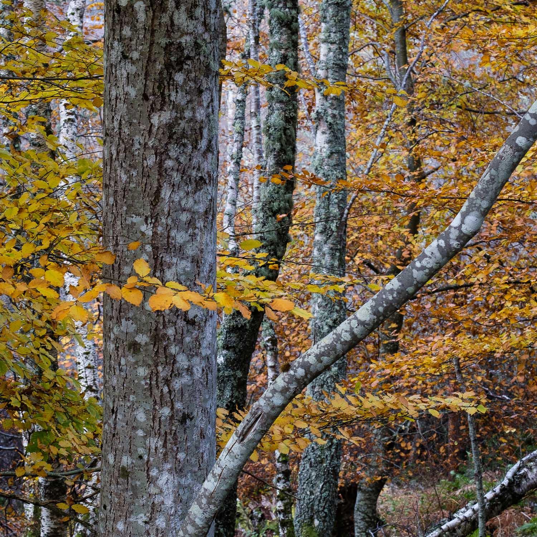Christopher Swan-Perthshire-Autumn-30.jpg