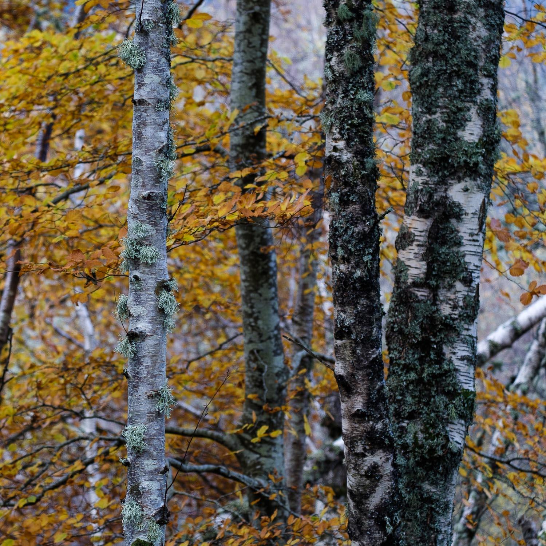 Christopher Swan-Perthshire-Autumn-31.jpg