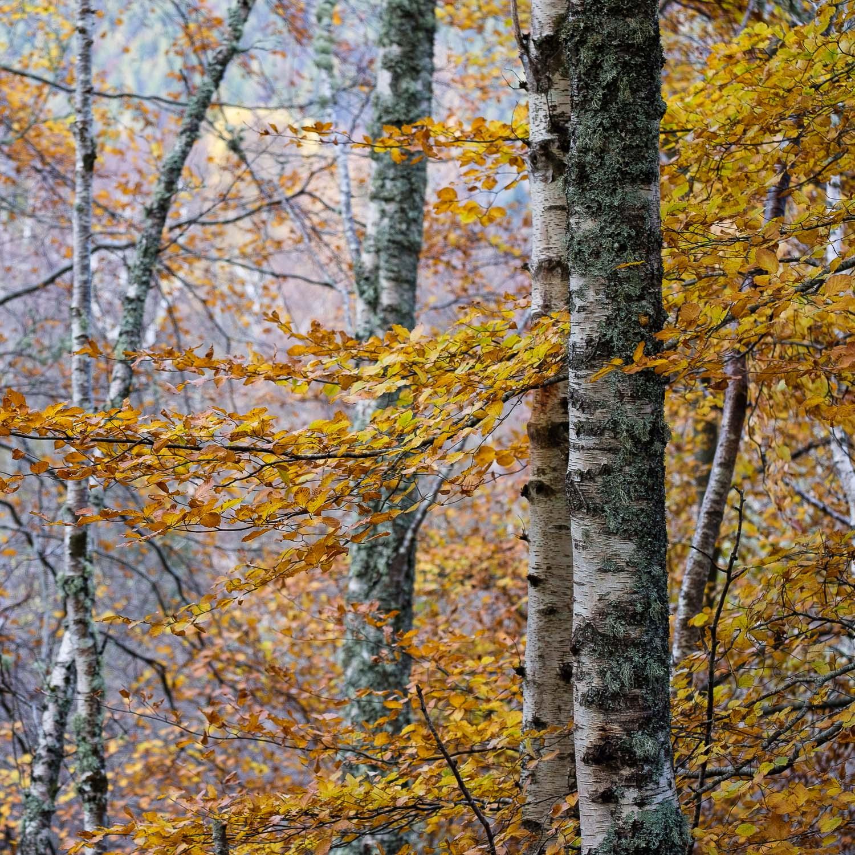 Christopher Swan-Perthshire-Autumn-32.jpg