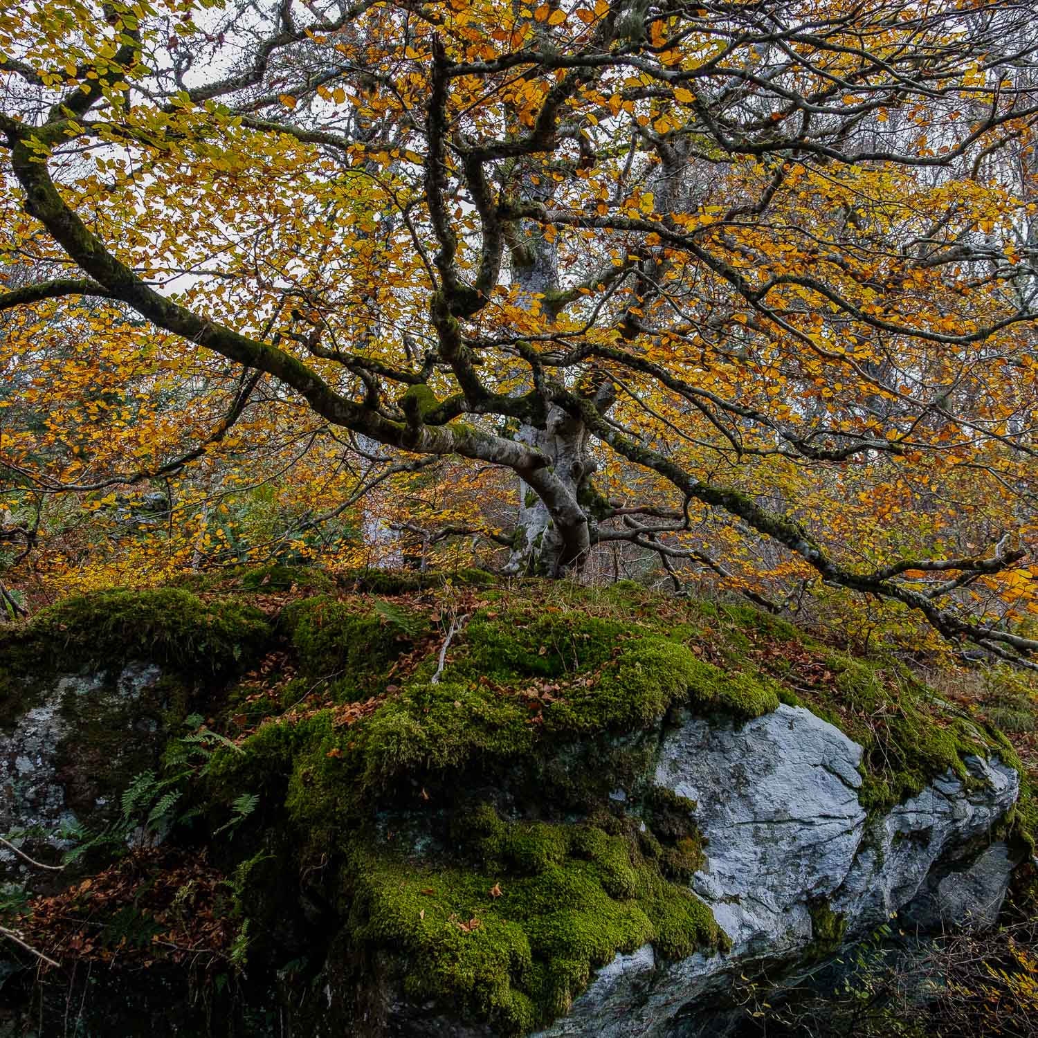Christopher Swan-Perthshire-Autumn-33.jpg