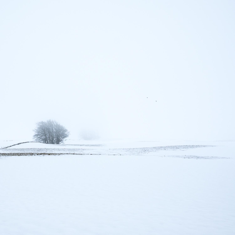 Christopher Swan-Whitespace-1.jpg