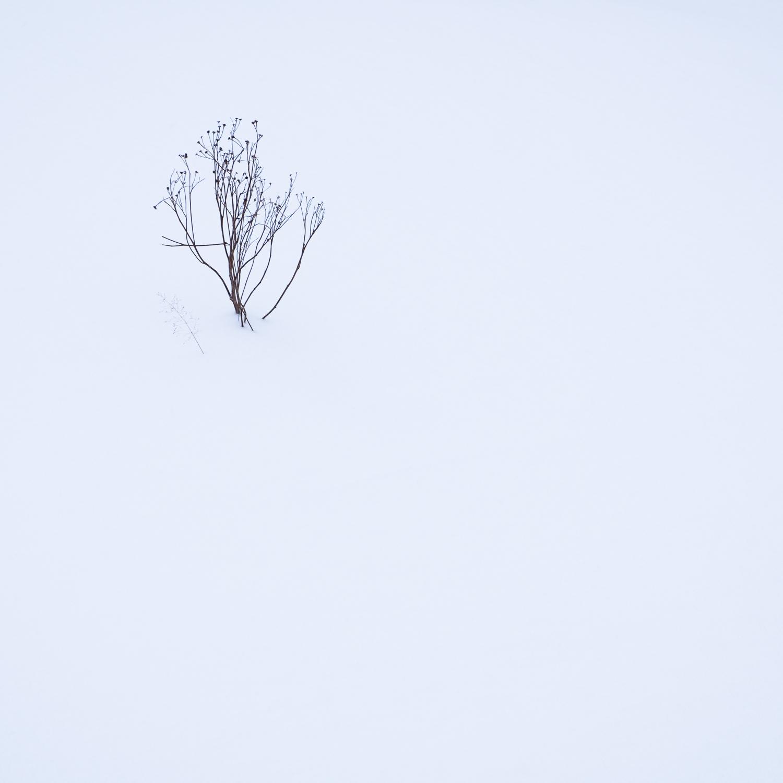 Christopher Swan-Glasgow-Snow-4.jpg