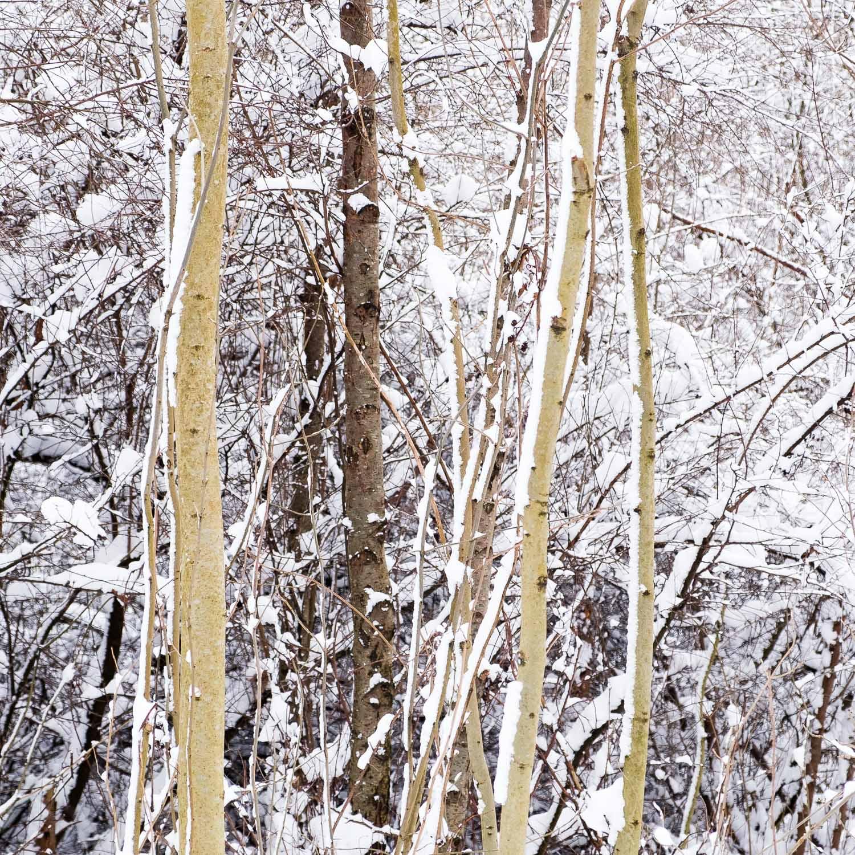 Christopher Swan-Glasgow-Snow-8.jpg