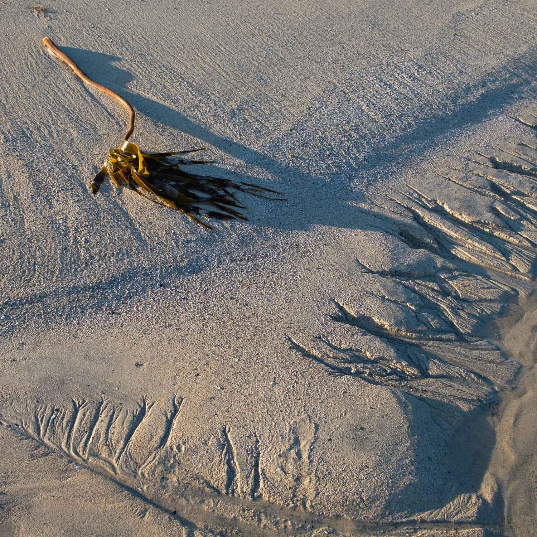 Christopher Swan Photography Harris Summer-14.jpg