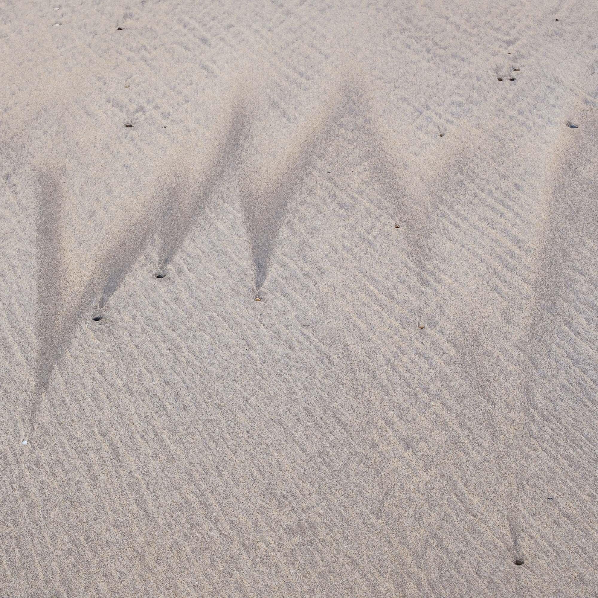 SWAN-COLL-9.jpg