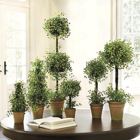Button-leaf Topiaries - Ballard Designs