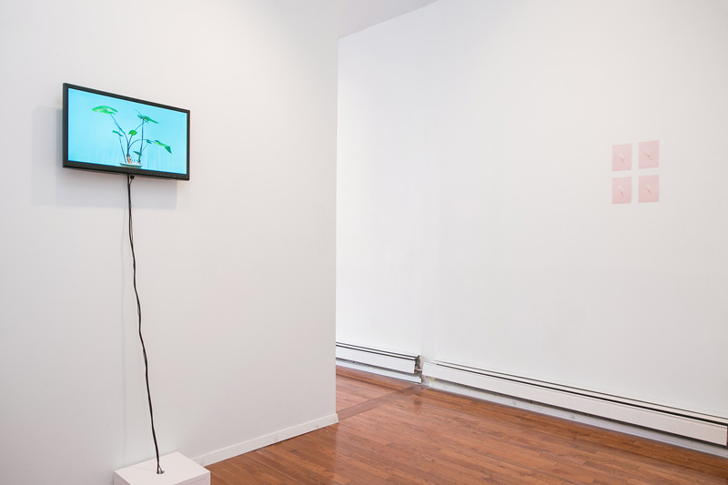 Installation view:  Ambients , Peninsula Art Space, Brooklyn, NY, 2014