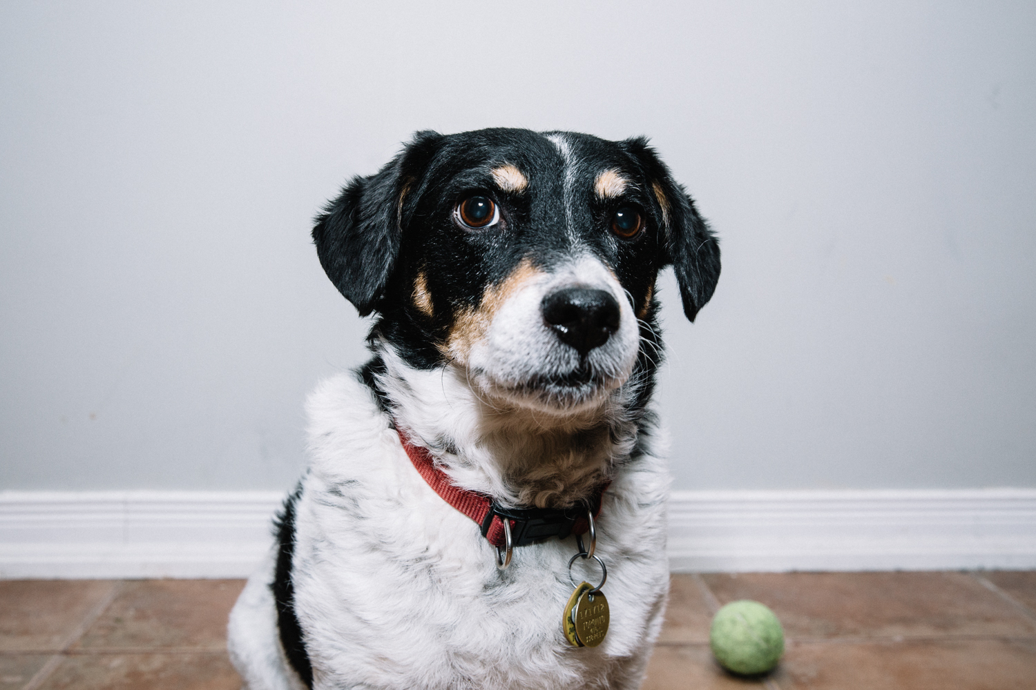 pet-photography-toronto.jpg