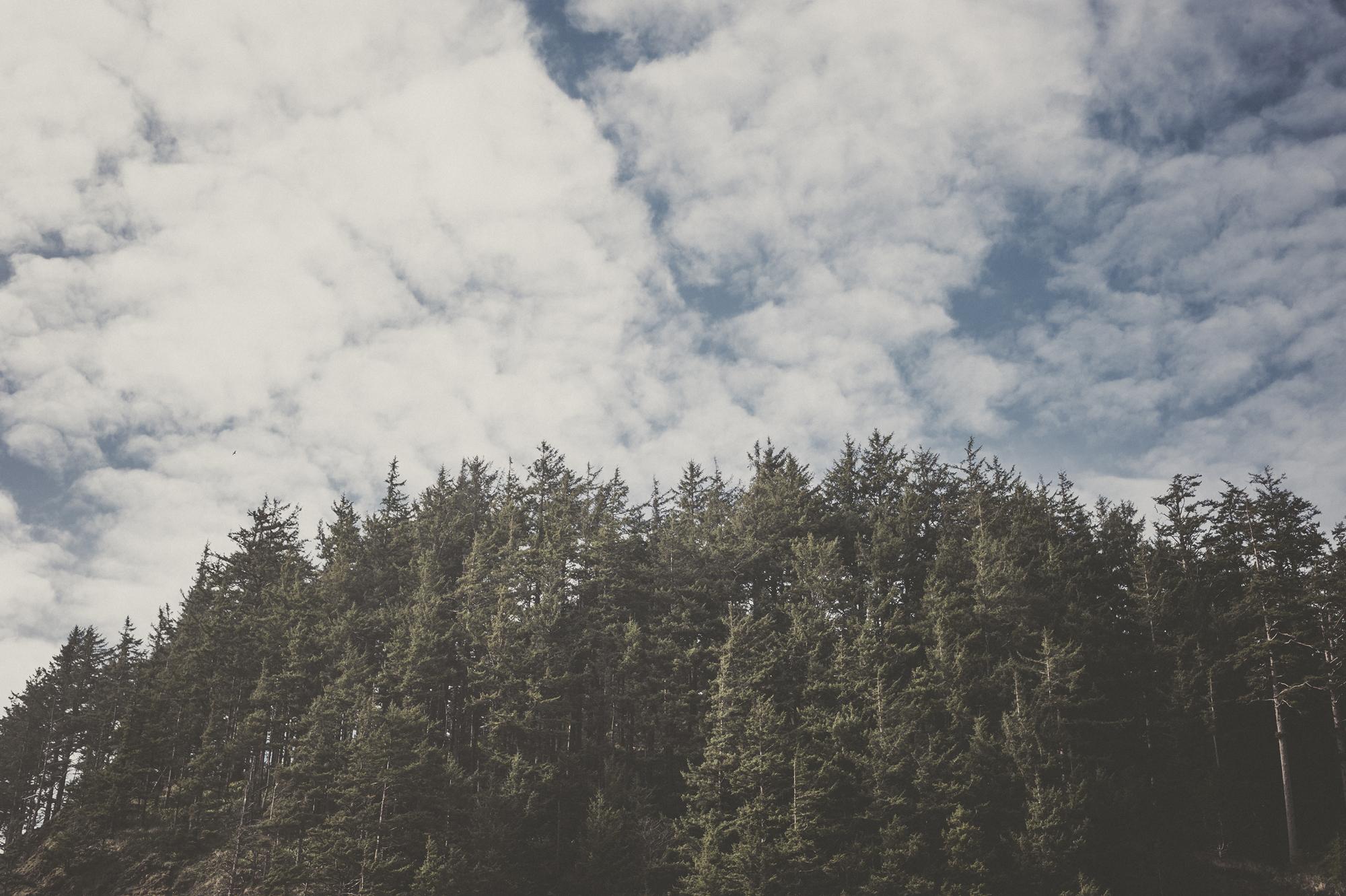 TaraShupe_Portland_157.jpg