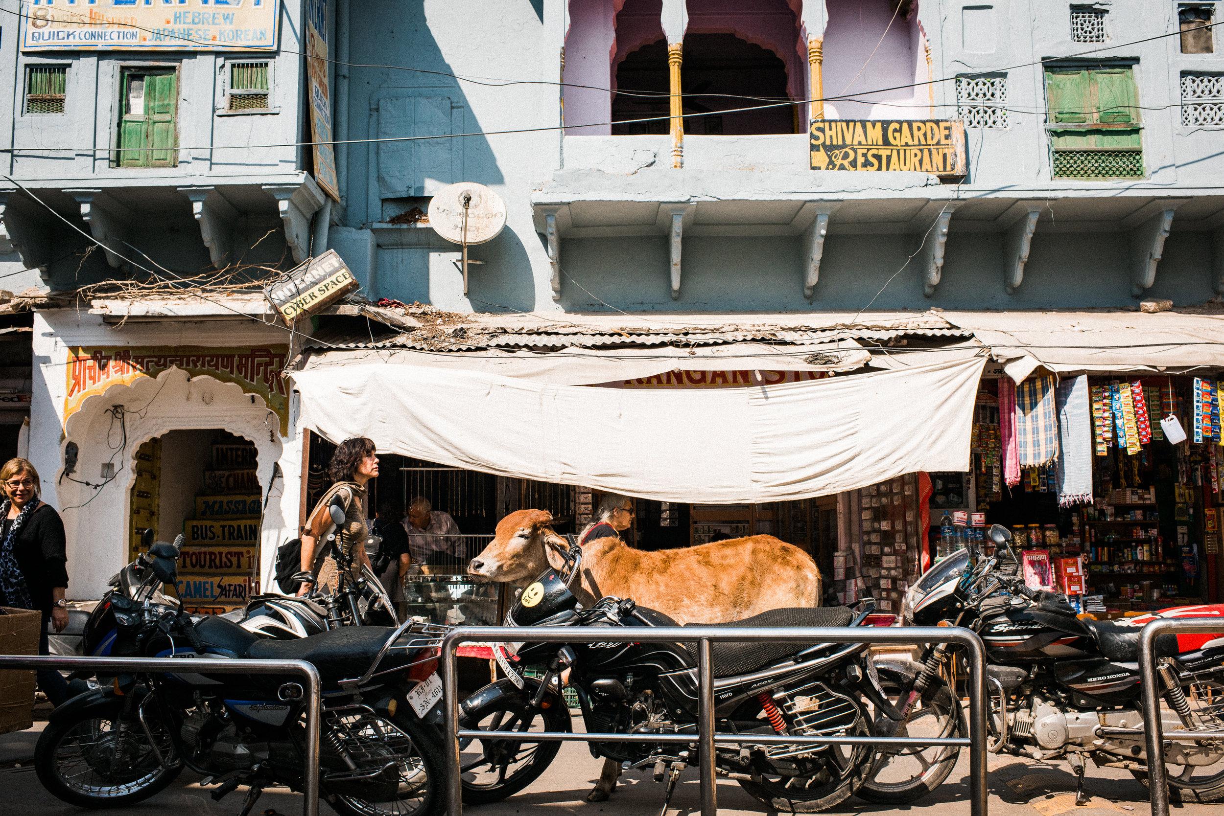 Pushkar_India_TaraShupe_Photography_006.jpg