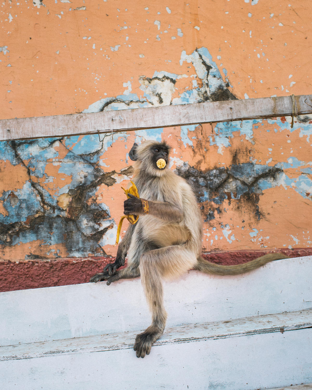 Pushkar_India_TaraShupe_Photography_026.jpg