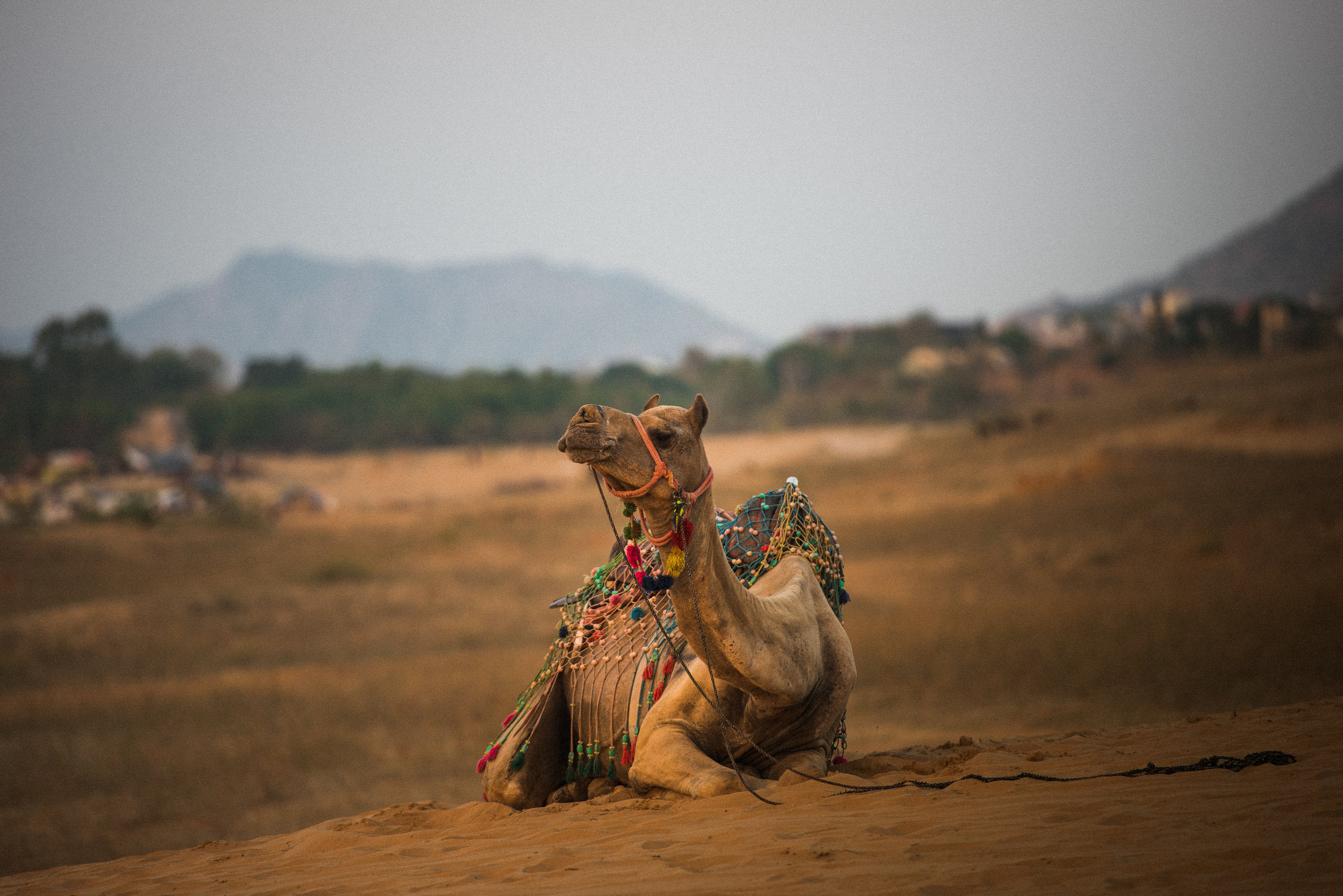 Pushkar_India_TaraShupe_Photography_073.jpg