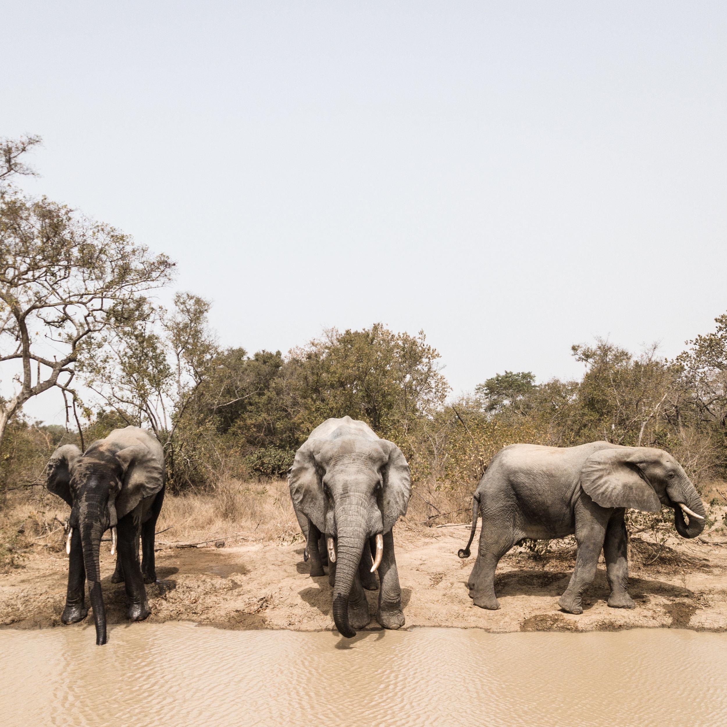 Ghana_African_Humanitarian_Photographer_TaraShupe_Safari_001.jpg