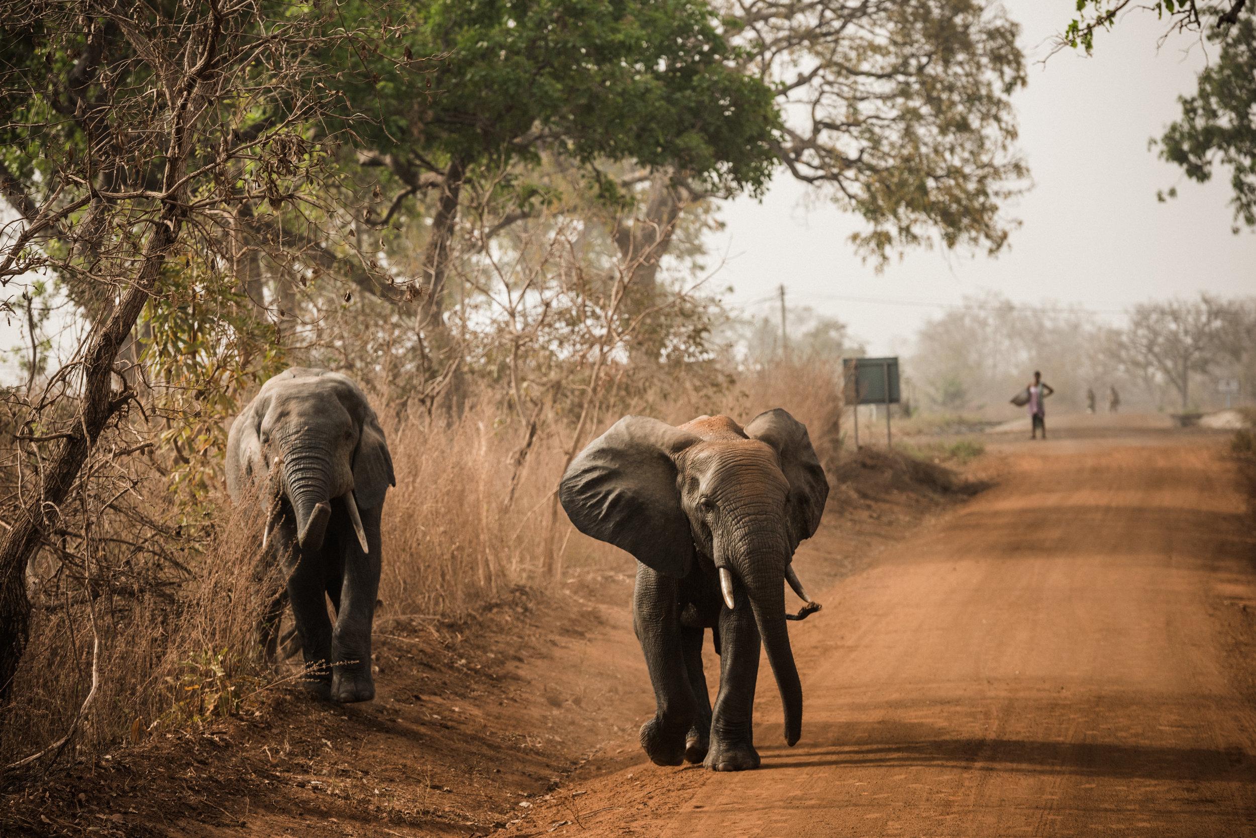 Ghana_African_Humanitarian_Photographer_TaraShupe_Safari_010.jpg