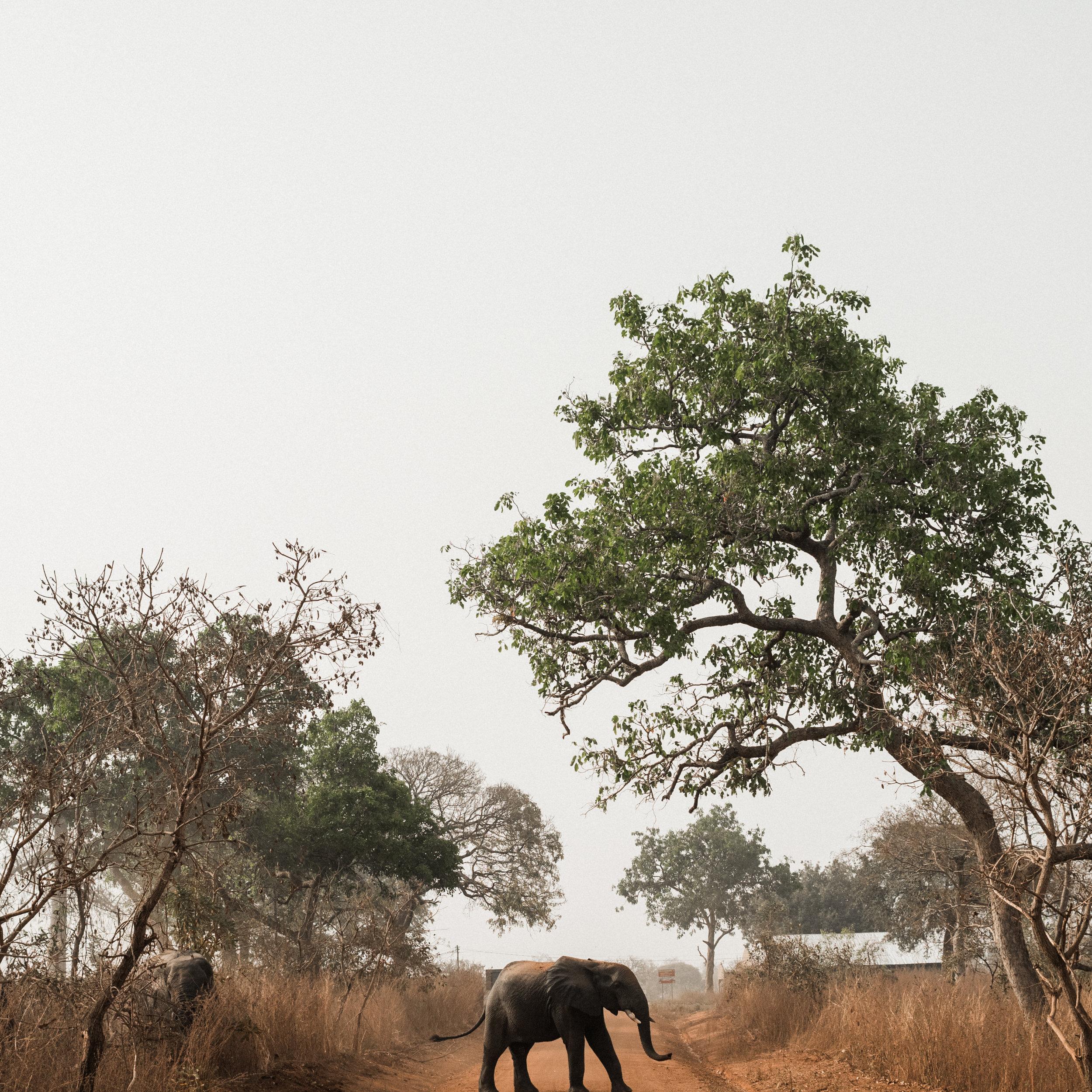 Ghana_African_Humanitarian_Photographer_TaraShupe_Safari_009.jpg