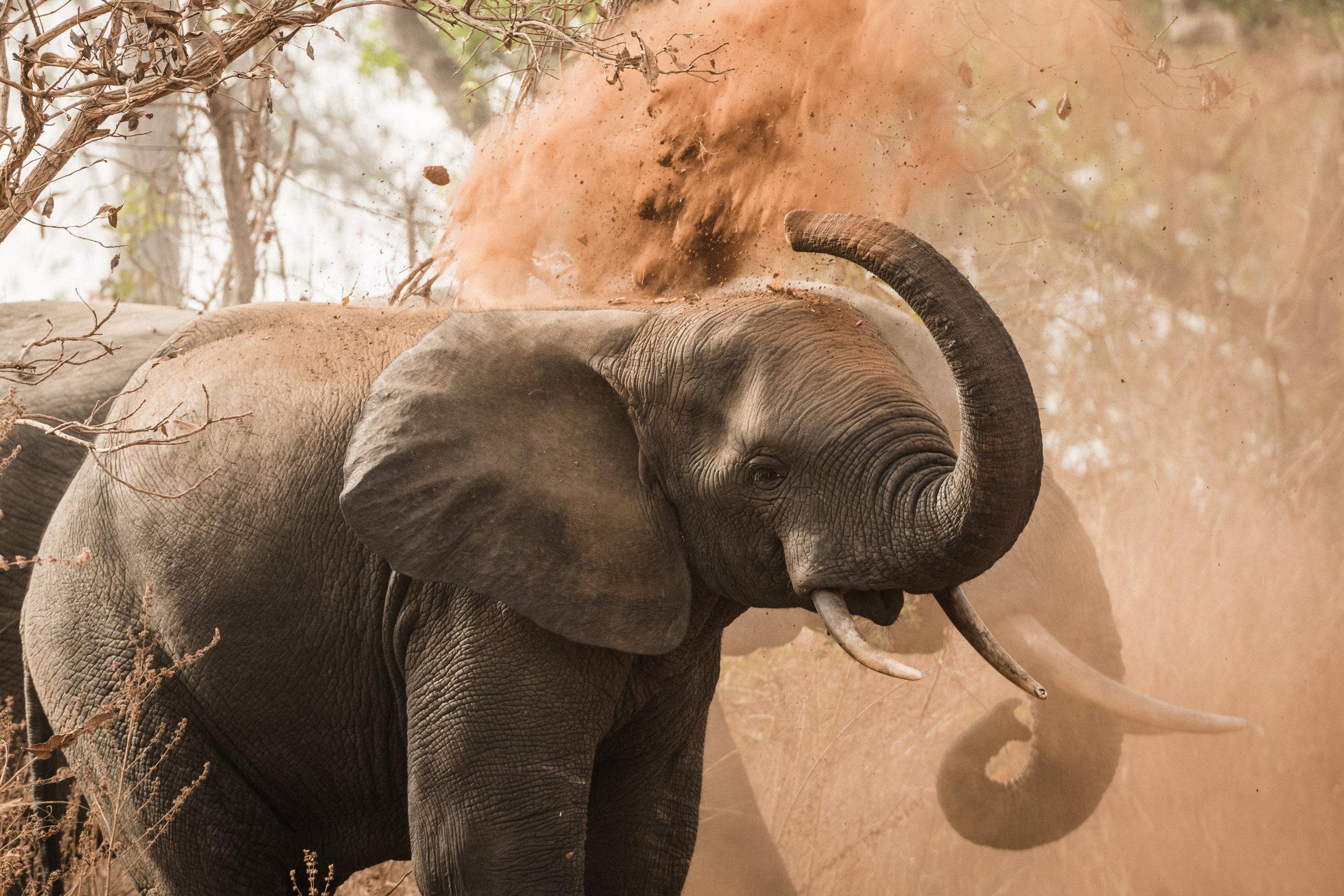 Ghana_African_Humanitarian_Photographer_TaraShupe_Safari_011.jpg