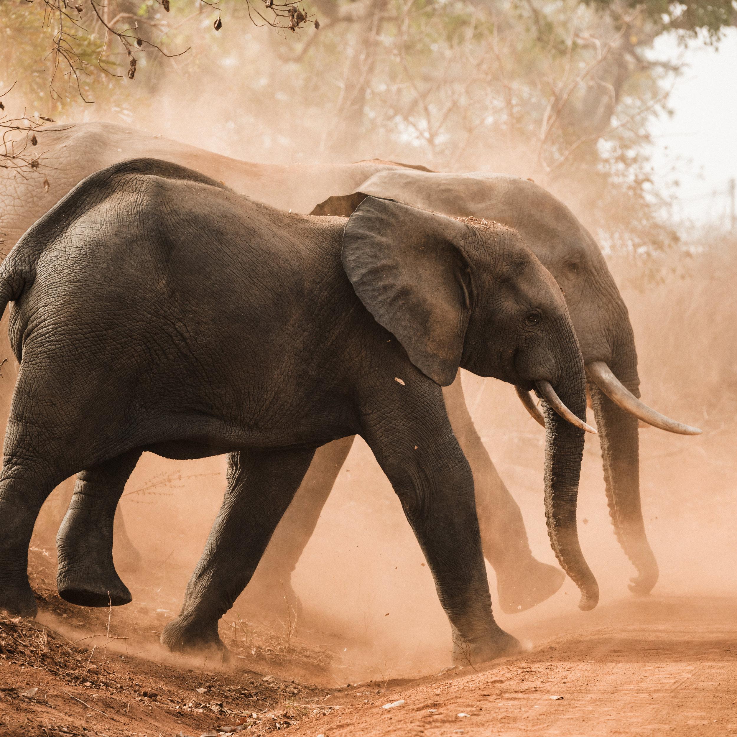 Ghana_African_Humanitarian_Photographer_TaraShupe_Safari_012.jpg