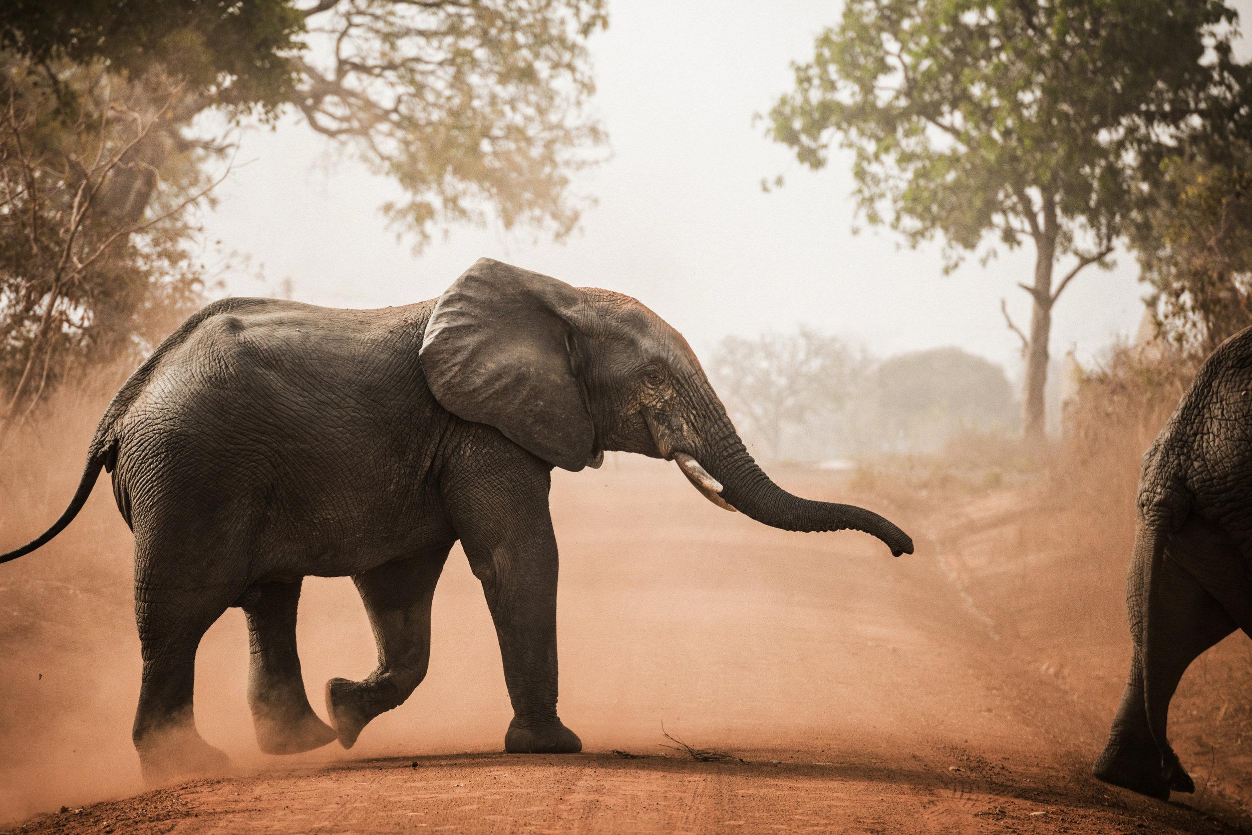 Ghana_African_Humanitarian_Photographer_TaraShupe_Safari_014.jpg