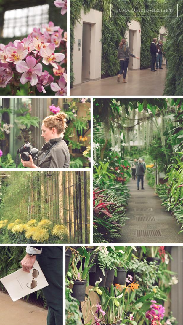 Summerfield Delight | Longwood Gardens