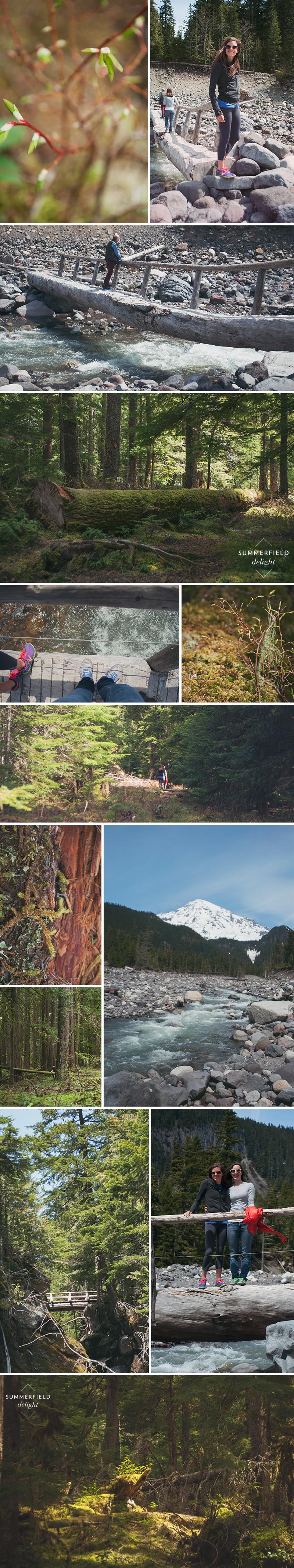 Summerfield Delight | Mt Rainer Trails