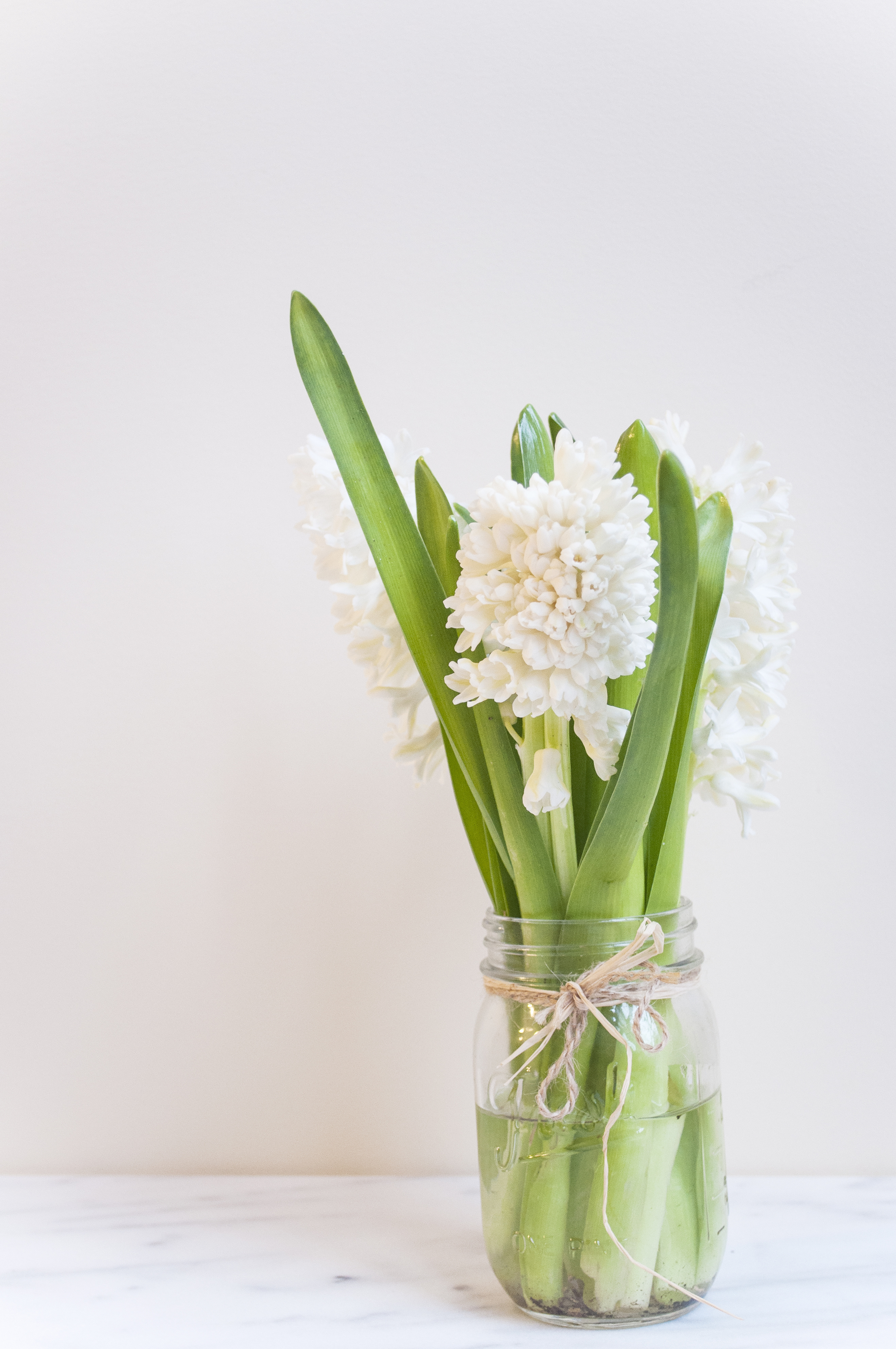 Summerfield Delight | Hyacinth