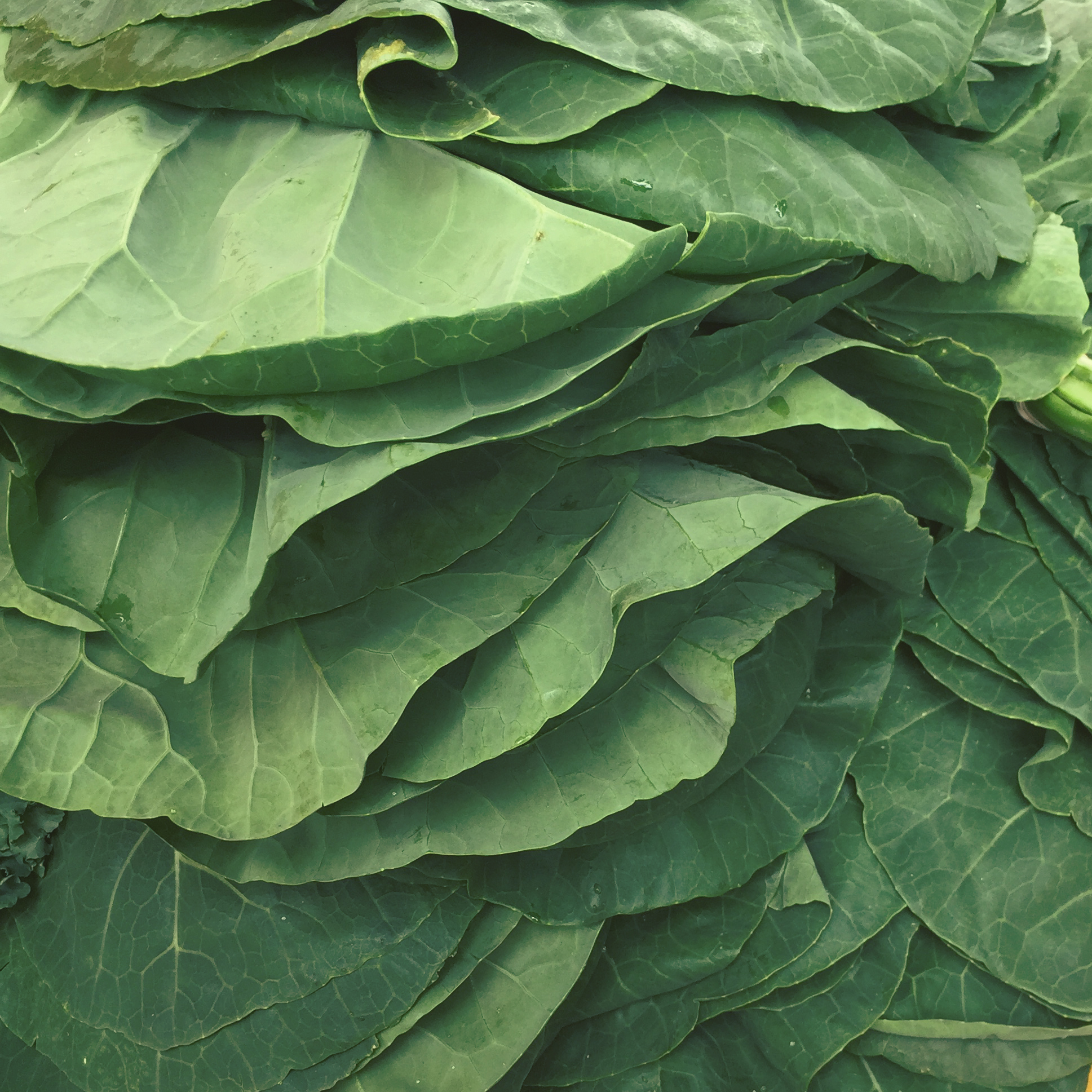 Summerfield Delight | Collards