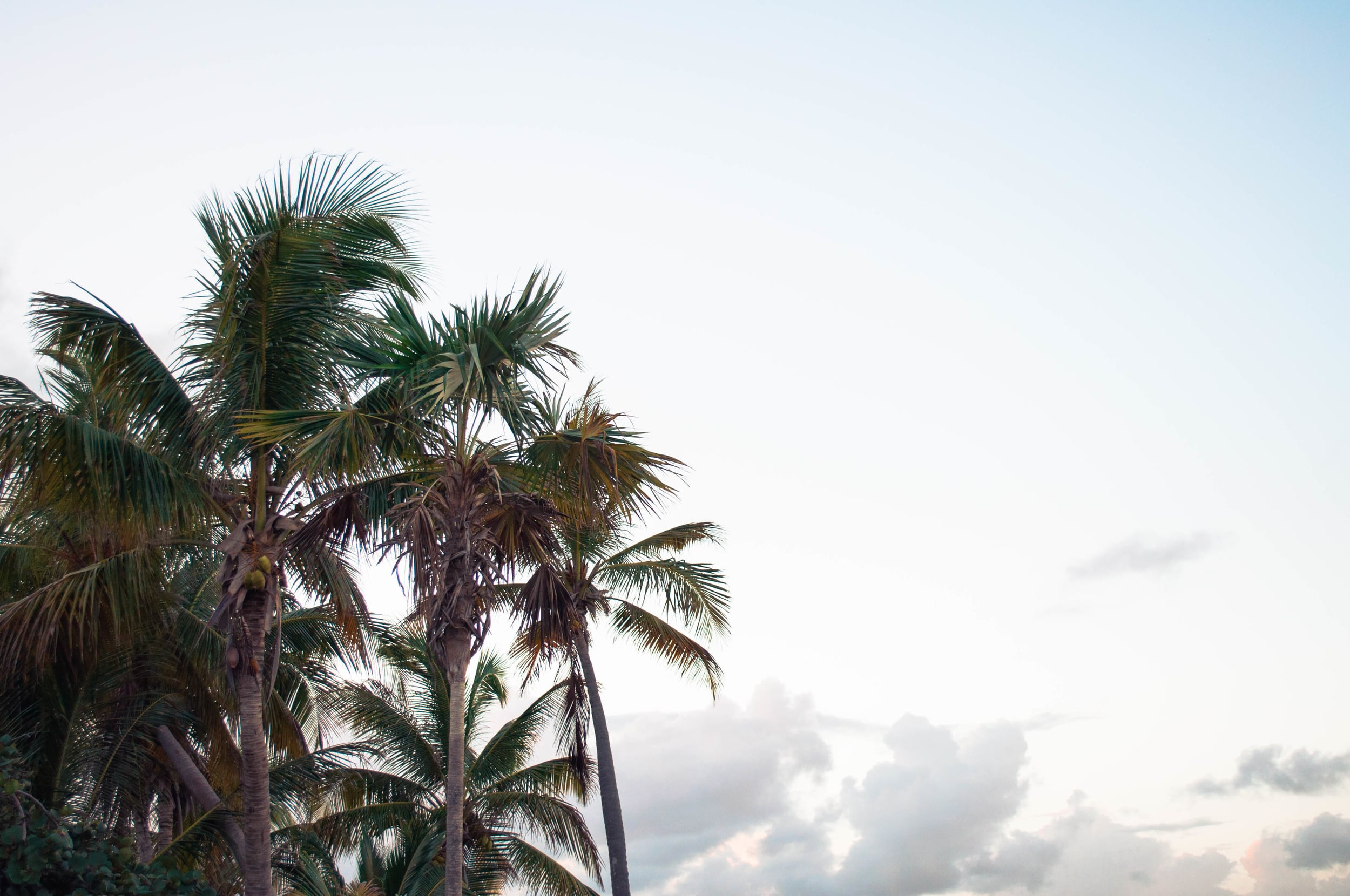 Summerfild Delight | Tropical Travels