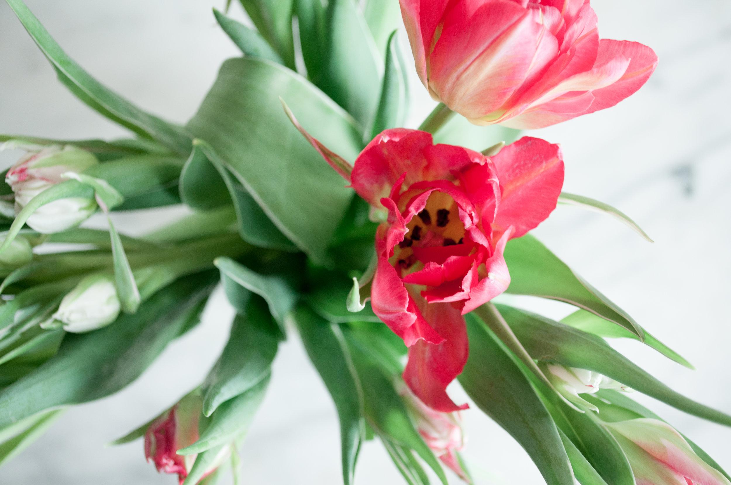 tulip-9.jpg