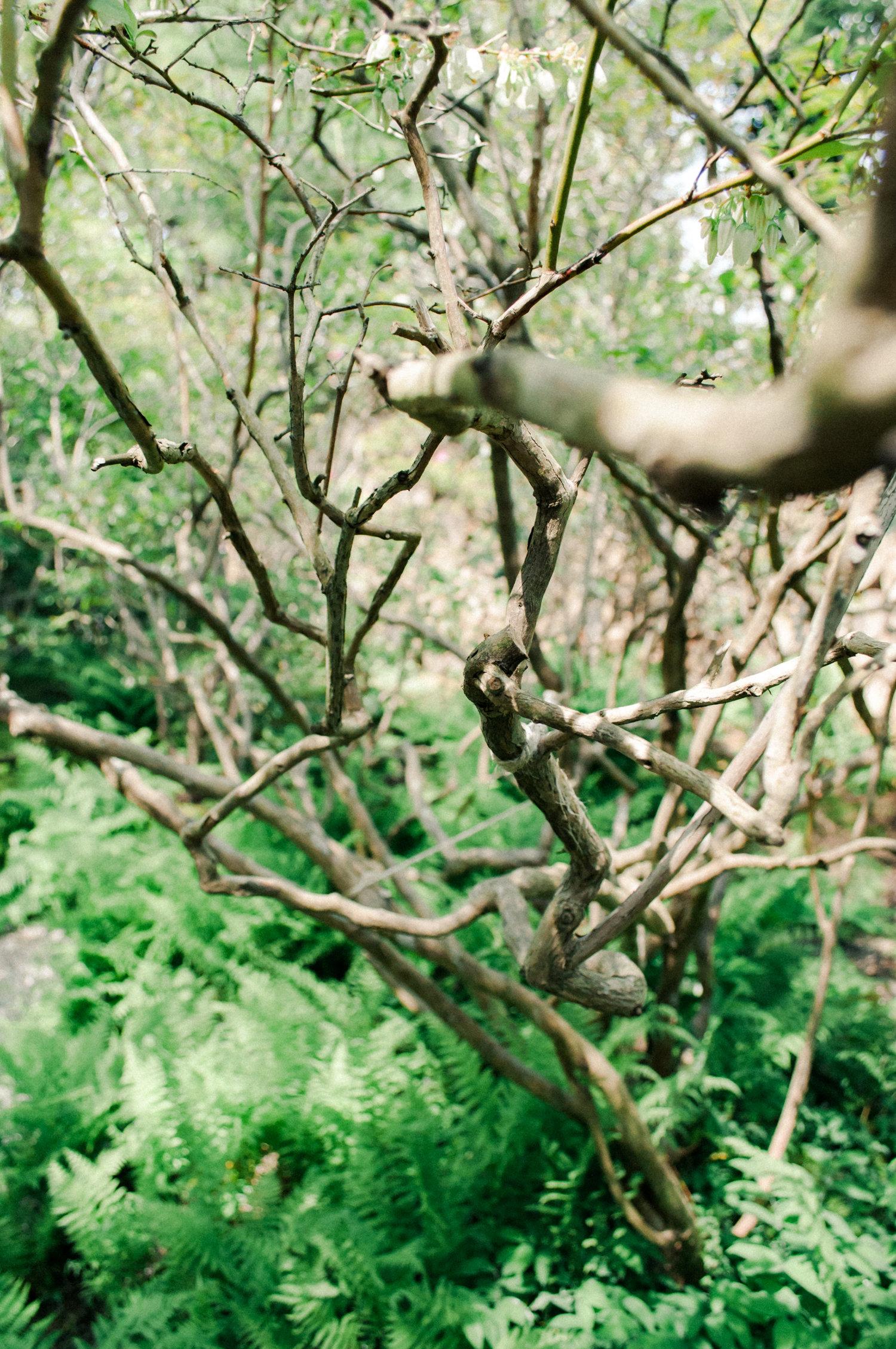sakonnetgarden-5.jpg