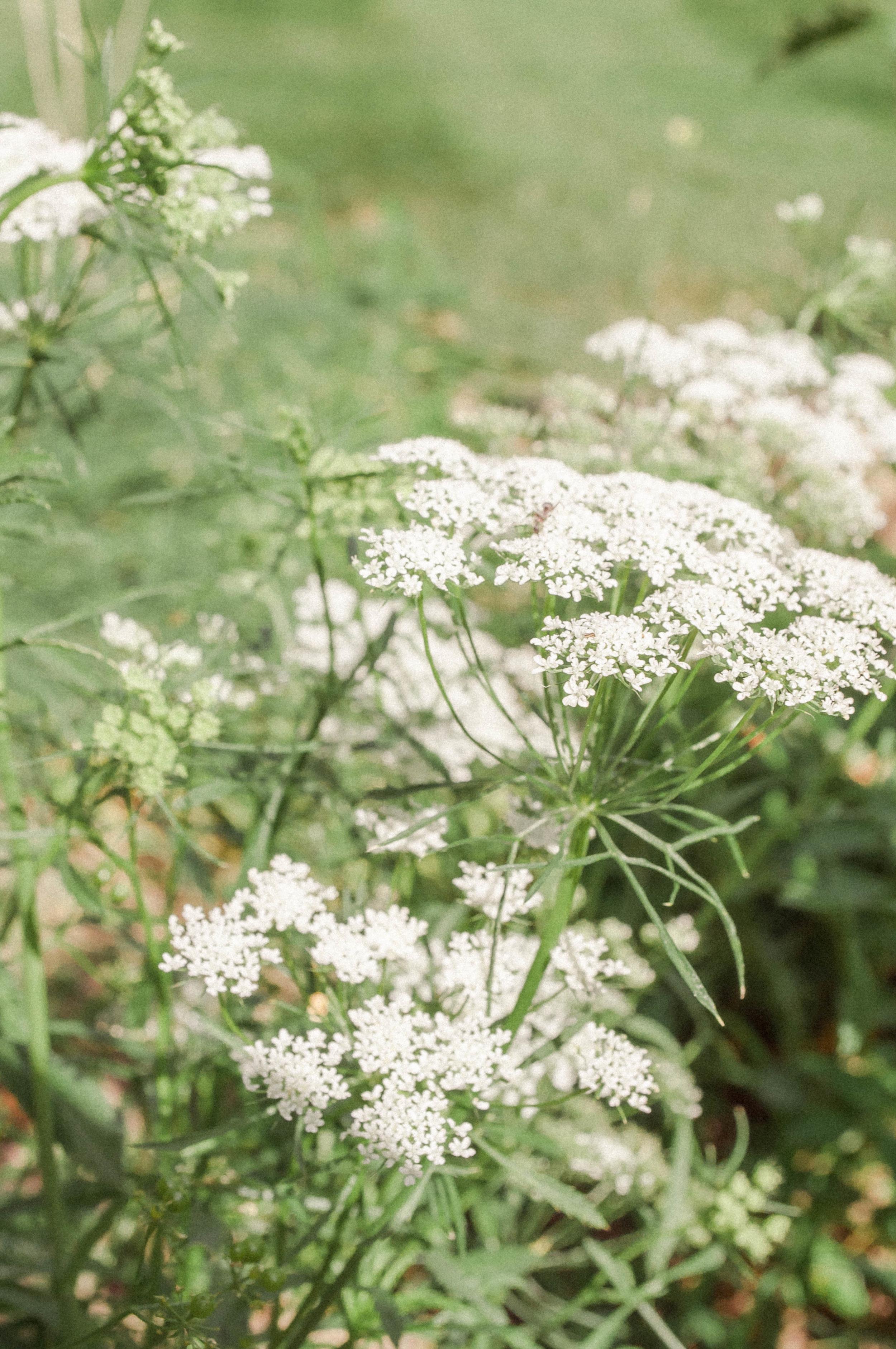 gardenaug3-64.jpg