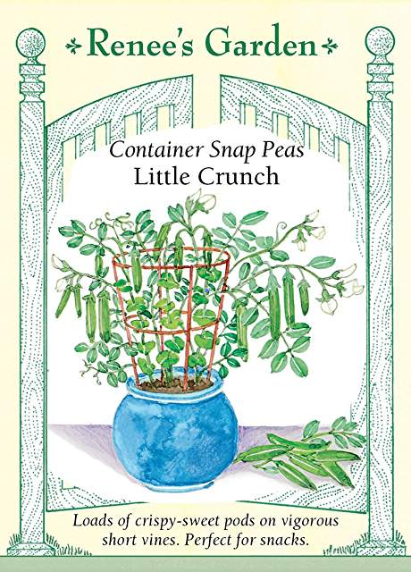 More Container Peas