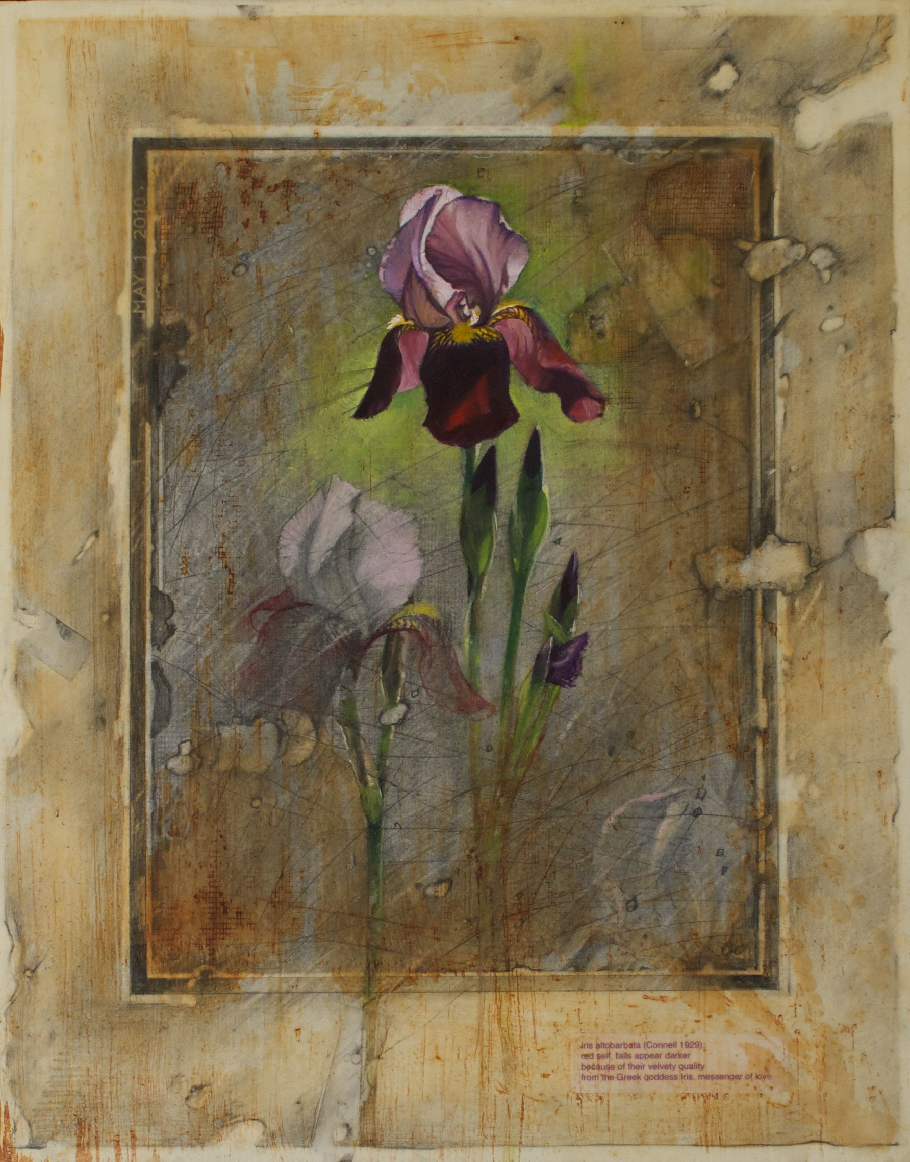 """Messenger of Love, 20"""" x 16"""" mixed media: graphite, beeswax and oil on panel"""